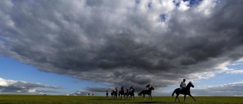 One of Alan Crowhurst's award-winning racing pictures - on the gallops at Newmarket - that saw him named Sports Photographer of the Year