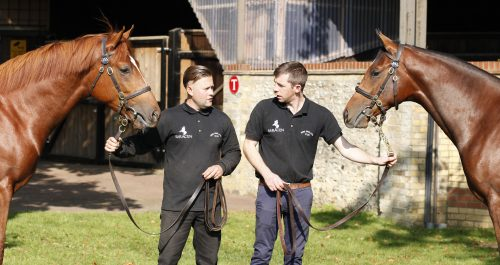 This is the sort of image which might catch the eye of the judges in the thoroughbred magazine competition
